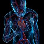 Cáncer de hígado ( hepatocarcinoma ), últimas investigaciones